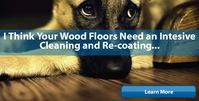 dog wants wood floors cleaned