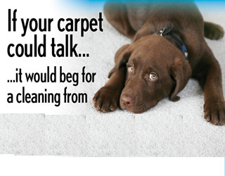 Outer Banks Carpet Cleaning