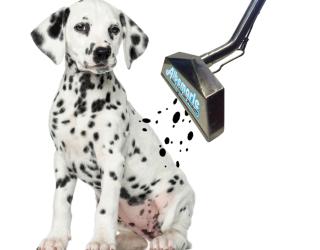 Dog-Spots
